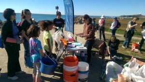 pillar point cleanup4