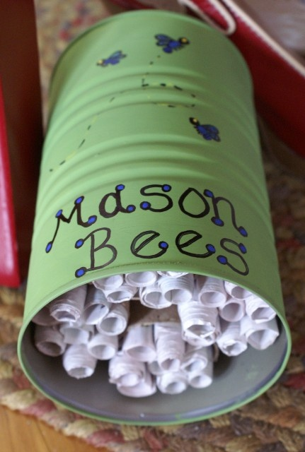 Diy Make A Bee House With Recycled Materials Pacifica