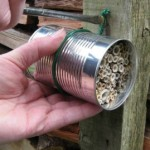 tin can with plant stems