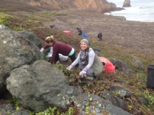 rockaway switchbacks habitat restoration