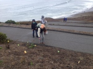 rockaway switchbacks habitat restoration2