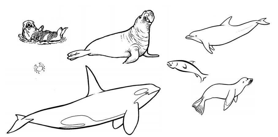 marin_mammals