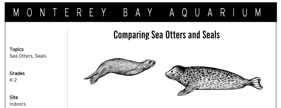 sea_otter_and_seals