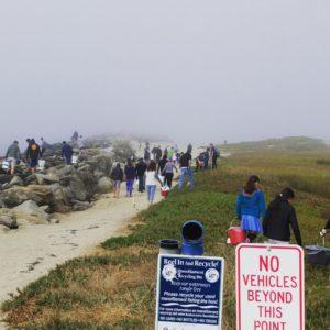 pillar point beach cleanup